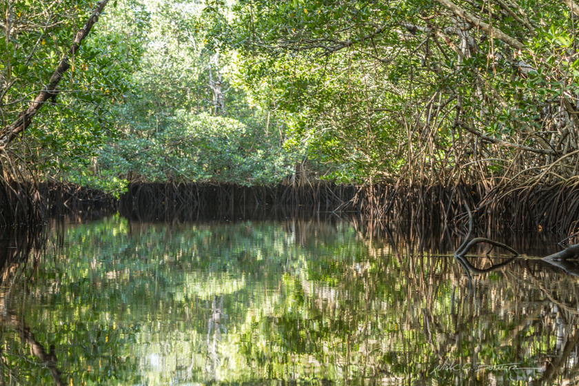 Kayaking Blackwater River - Collier-Seminole State Park