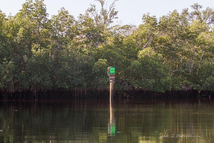 Kayaking Blackwater River - Collier-Seminole State Park