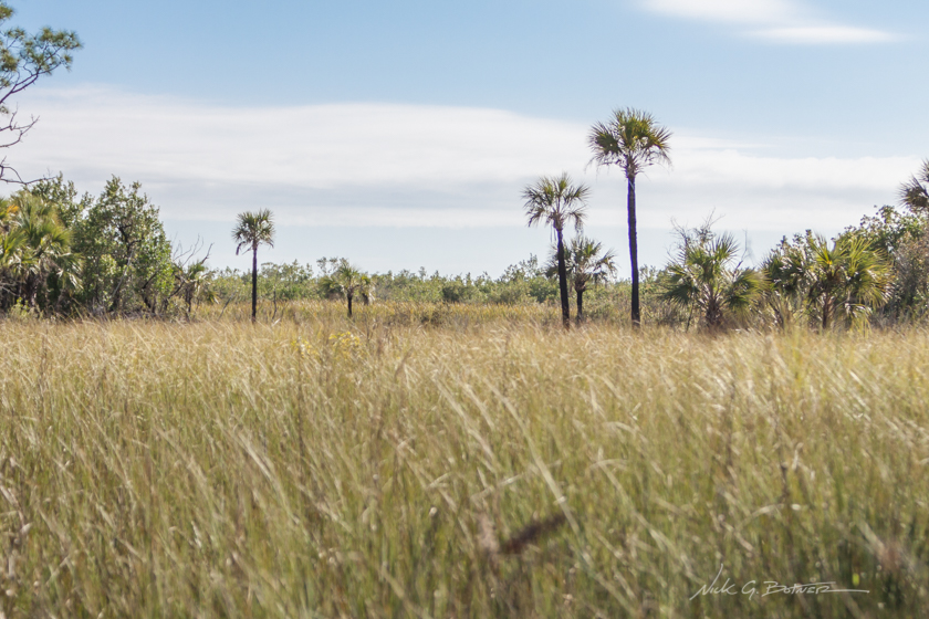 Hiking Florida - Collier-Seminole State Park