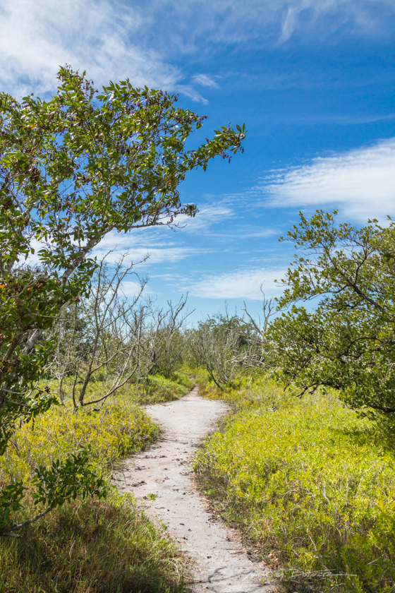 Hiking Flamingo Trail in the Everglades National Park