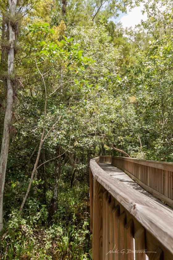 kirby storter boardwalk, florida everglades
