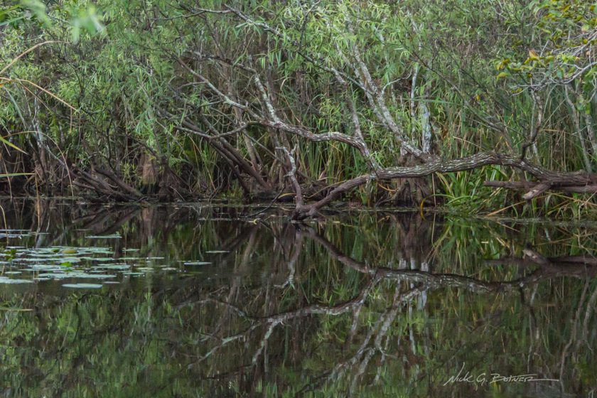 Kayaking Turner River in the Florida Everglades