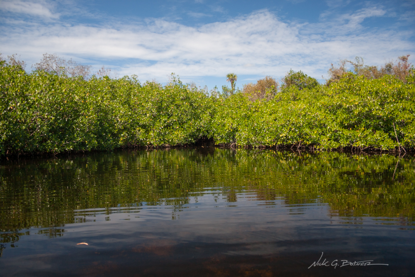 Kayaking down the Turner River in the Florida Everglades