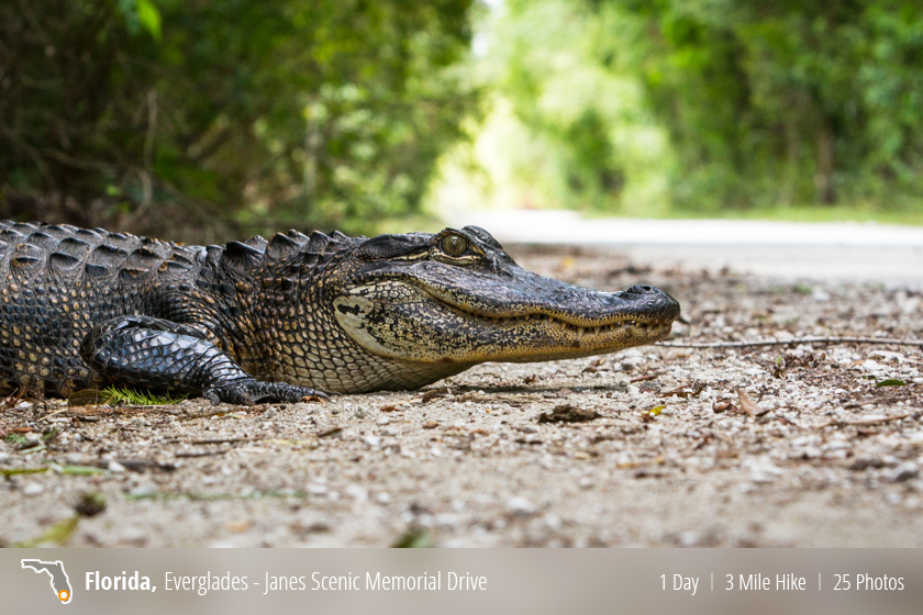 Janes Scenic Drive - Fakahatchee Strand State Preserve, FL