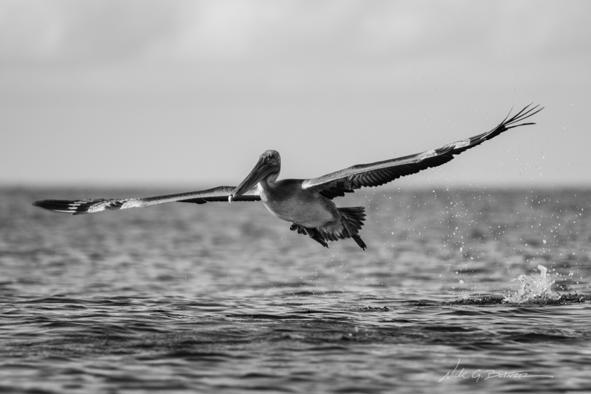 Kayaking Keewaydin Island in Naples, Florida - Black and White