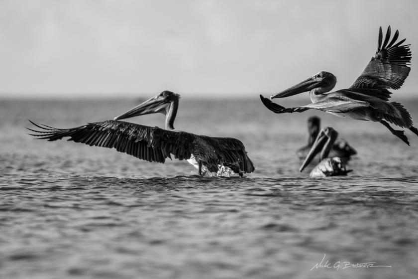 Kayaking Keewaydin Island in Naples, Florida - Black and White