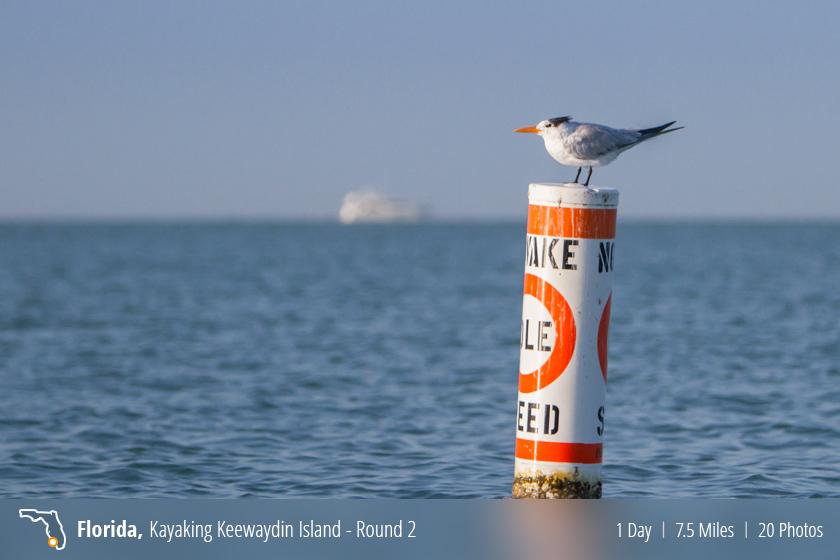 Kayaking – Keewaydin Island, Naples FL