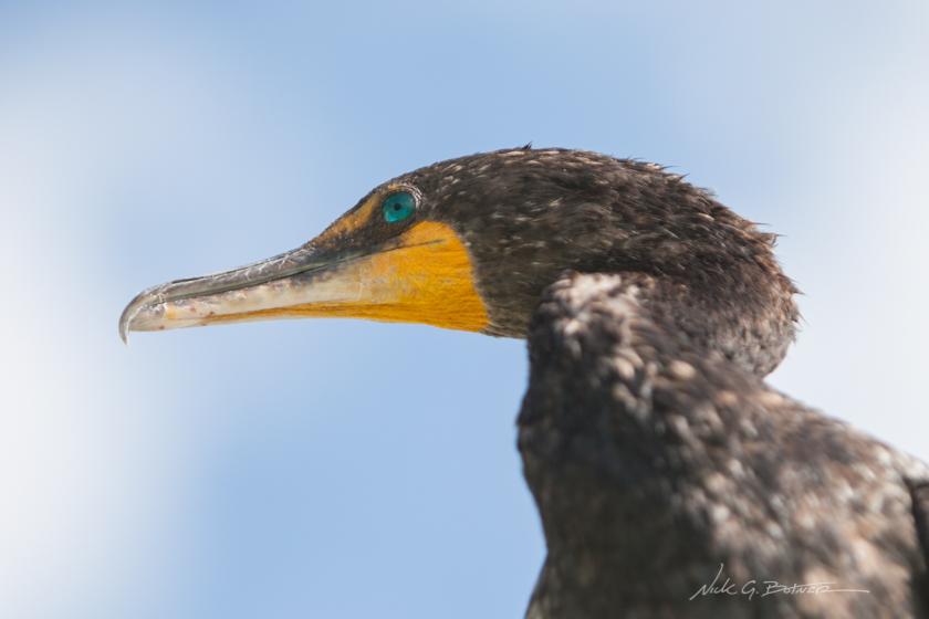 Coastal Birds of Naples Florida