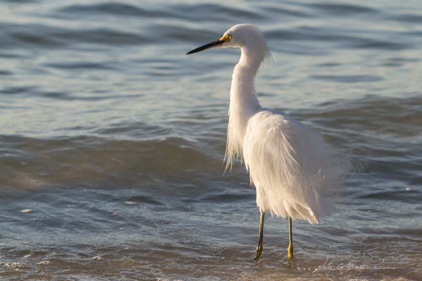 Coastal Birds on the Beaches of Naples Florida