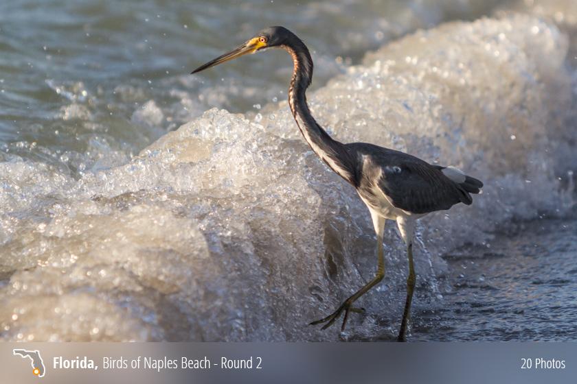 Beach Birds Florida Coastal Birds on The Beaches