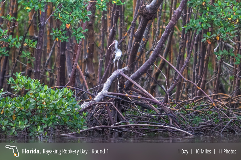 Kayaking – Rookery Bay, Naples FL