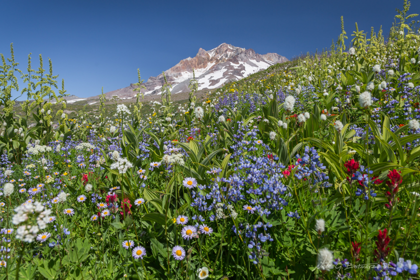 Hiking Mt. Hood, Paradise Park, Oregon