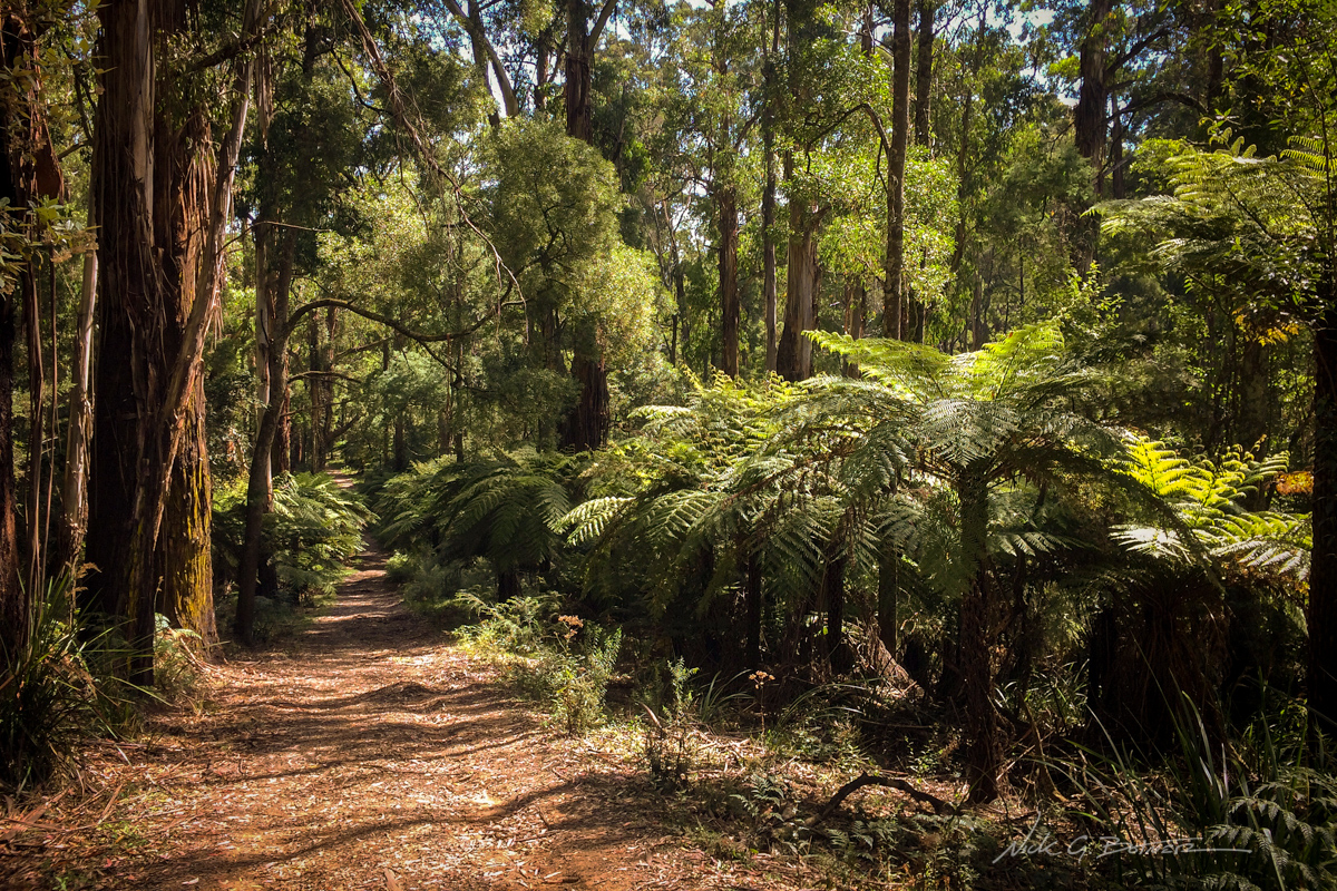 Dandenong Ranges National Park, Australia