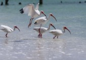 FL_Naples-Birds-08527