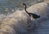 FL_Naples-Birds-091412