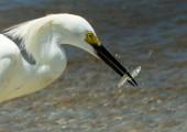 FL_Naples-Birds-110507