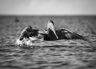Kayaking Florida – Keewaydin Island (B&W Edition)