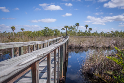 Hiking Florida – Old Briggs Nature Center, Naples