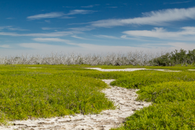 Hiking Florida – Flamingo, Everglades National Park