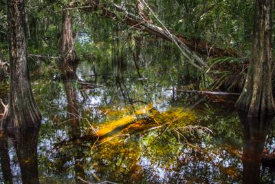 Hiking Florida – Kirby Storter Boardwalk, Everglades