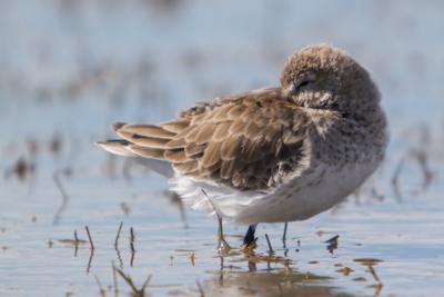 Florida Coast – Birds of Tigertail Beach, Marco Island